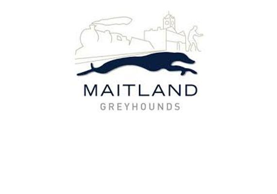 Maitland Greyhounds